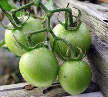 Konfitura z zielonych pomidorów: przepis