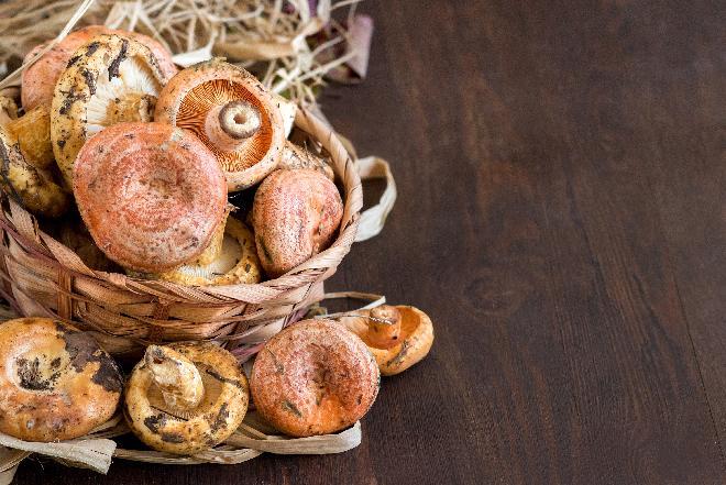 Mleczaj rydz - jakie wartości odżywcze mają rydze? Jak przyrządzić rydze? [WIDEO]